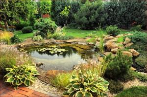 Pond Design Made Easy With Ziba