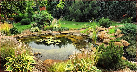 Pond Design Made Easy With Ziba Design Construction